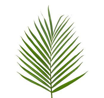 cat-palm-website-hs_500x333