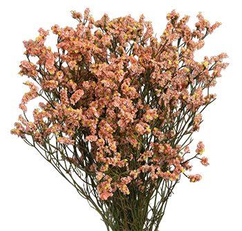 coral-website-hs_500x333