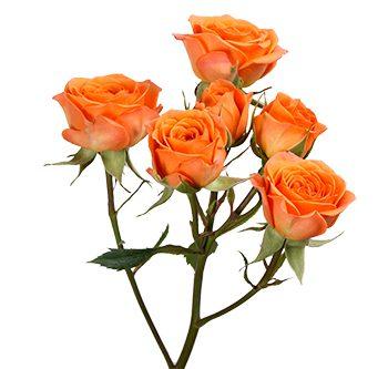 tangerine-website-hs