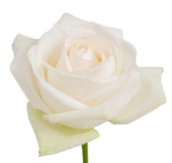 white-ohara-website-hs