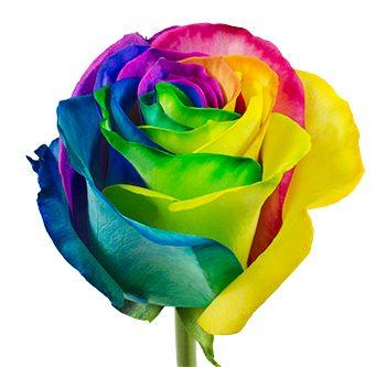 rainbow-hs