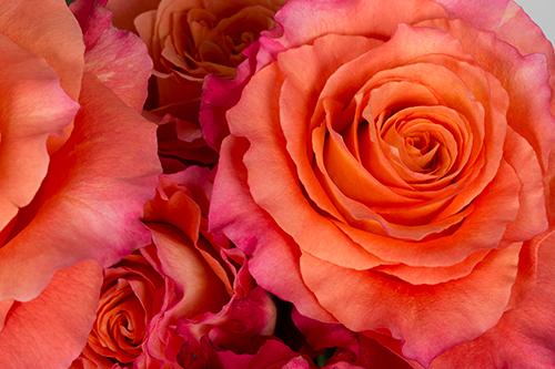 Free Spirit Royal Flowers