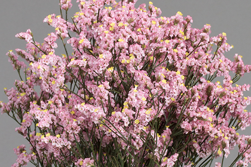 Pink Royal Flowers