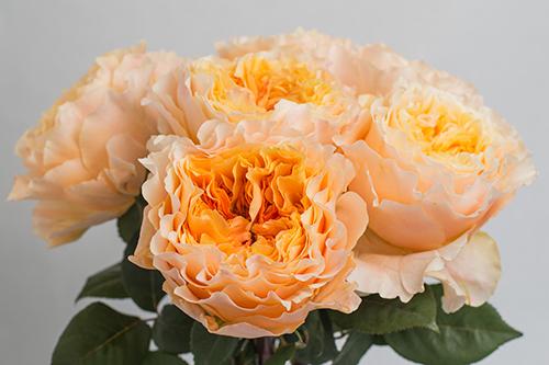 Caraluna Royal Flowers