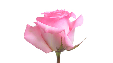 priceless royal flowers